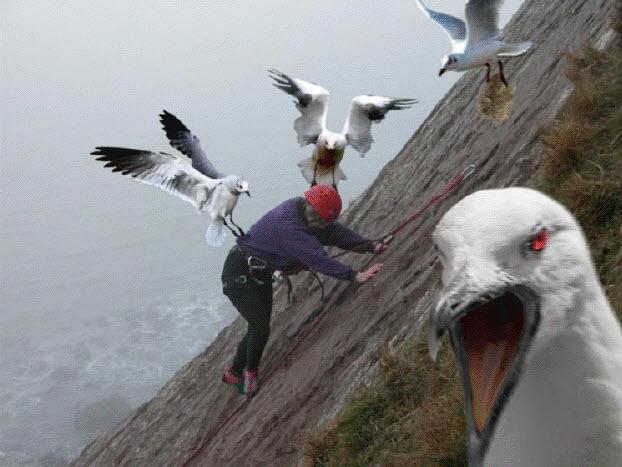 Birds attacking somebody