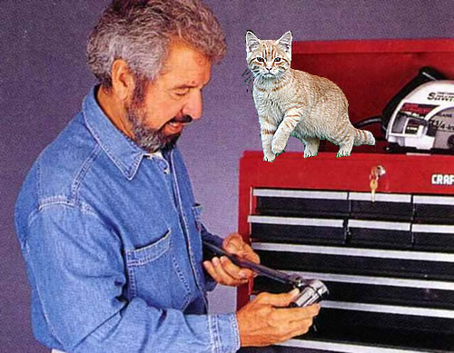 Bob Vila and a cat