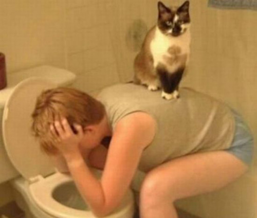 Cat stands on somebody with a hangover