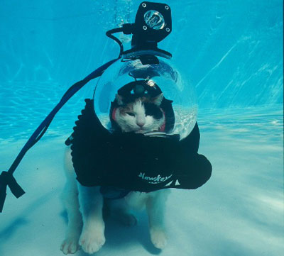 Cat in Diving Gear