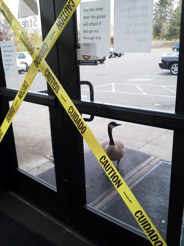"Sign warns against opening the door ""or the goose will attack"""