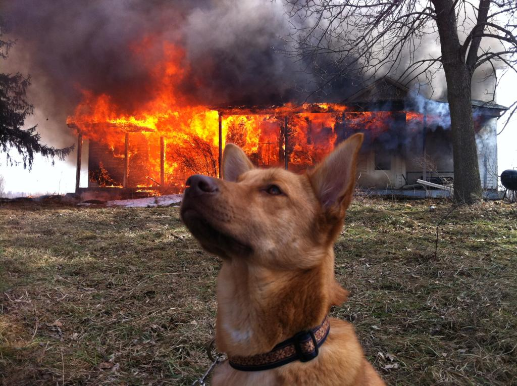 Dog in front of house fire