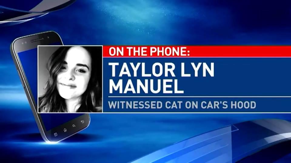Taylor Lyn Manuel: Witnessed Cat on Car's Hood