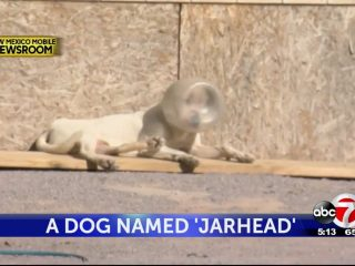 "A Dog Named ""Jarhead"""