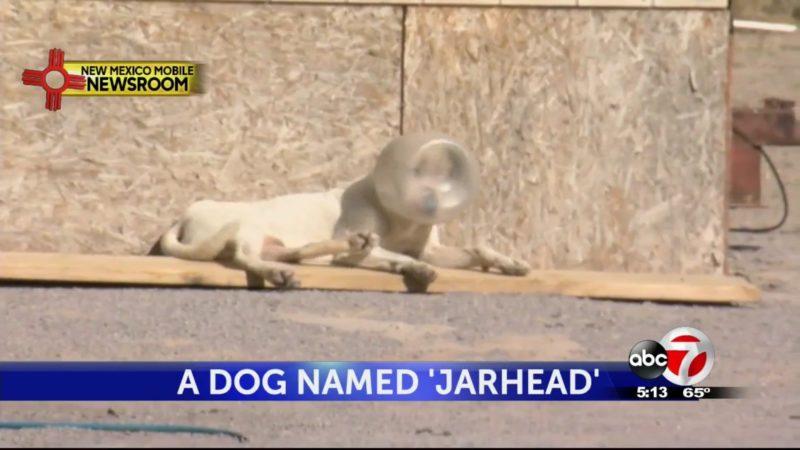 """A Dog Named """"Jarhead"""""""