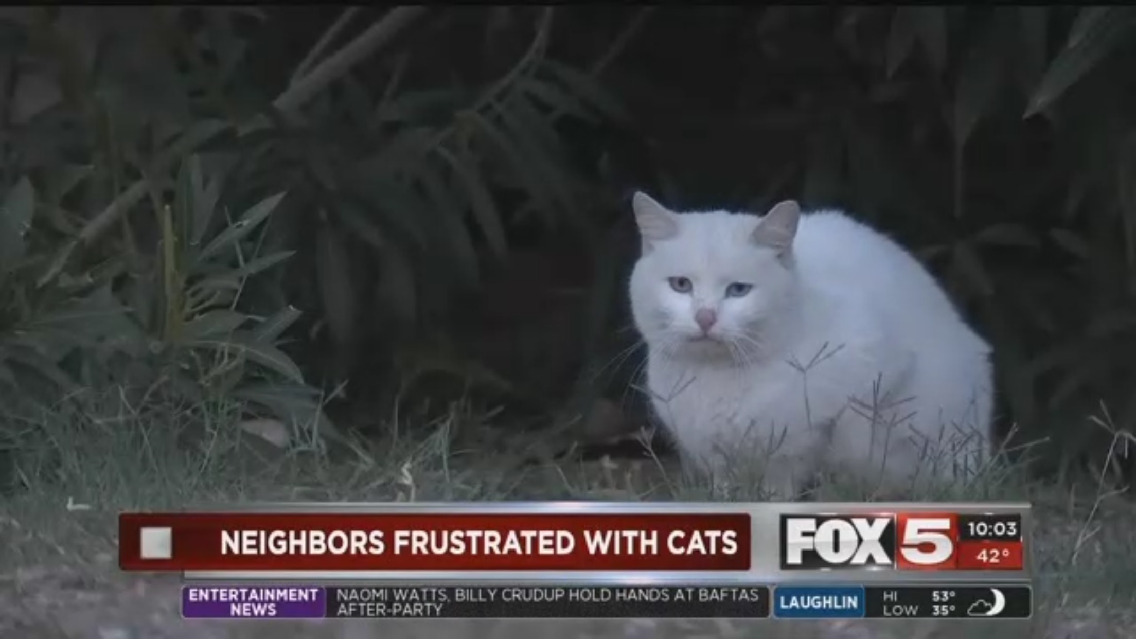 Neighbors Frustrated By Cats
