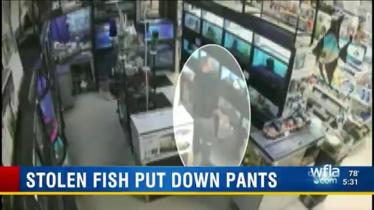 Stolen Fish Put Down Pants