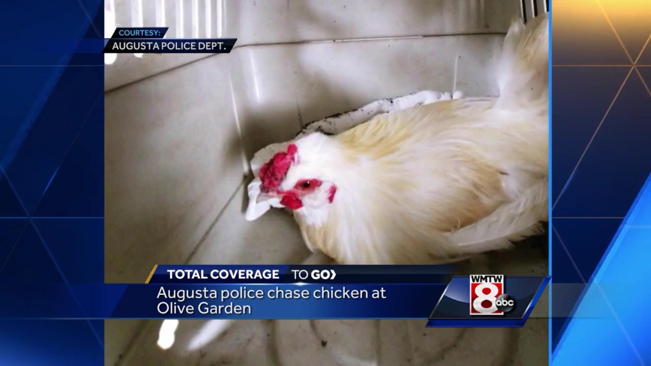 Augusta Police chase chicken at Olive Garden
