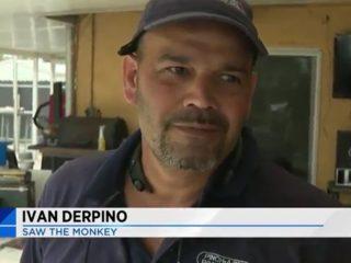 Ivan Derpino: Saw The Monkey