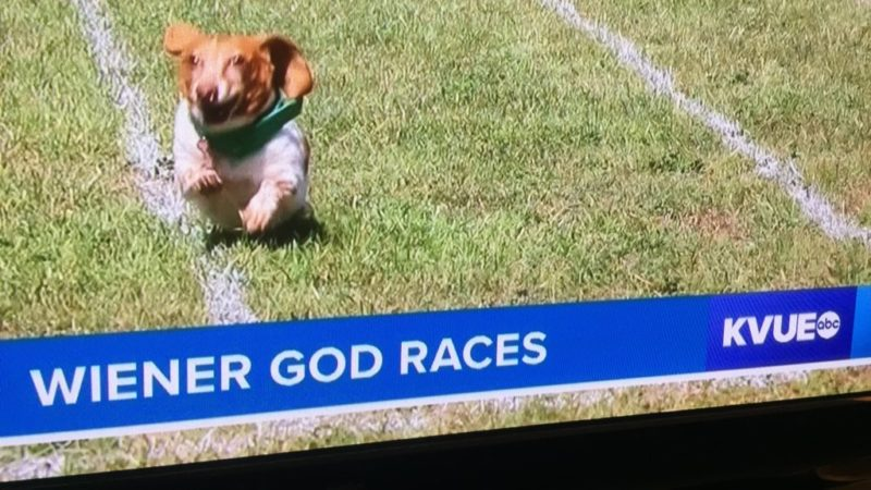 "Dog on a field. Chyron says ""Wiener God Races"""
