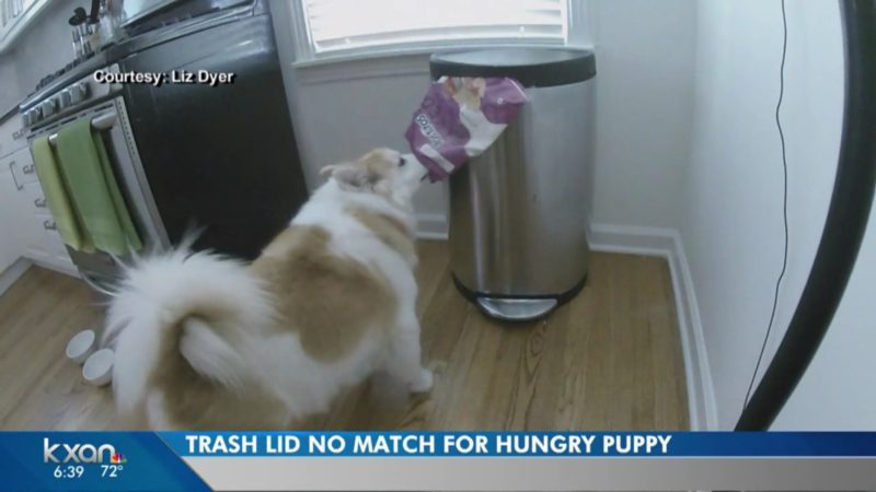 Trash Lid No Match For Hungry Puppy
