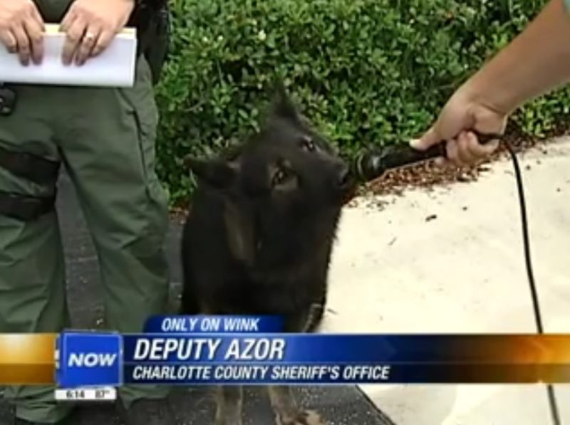 Deputy Azor: Charlotte County Sheriff's Office (Deputy Azor is a dog)