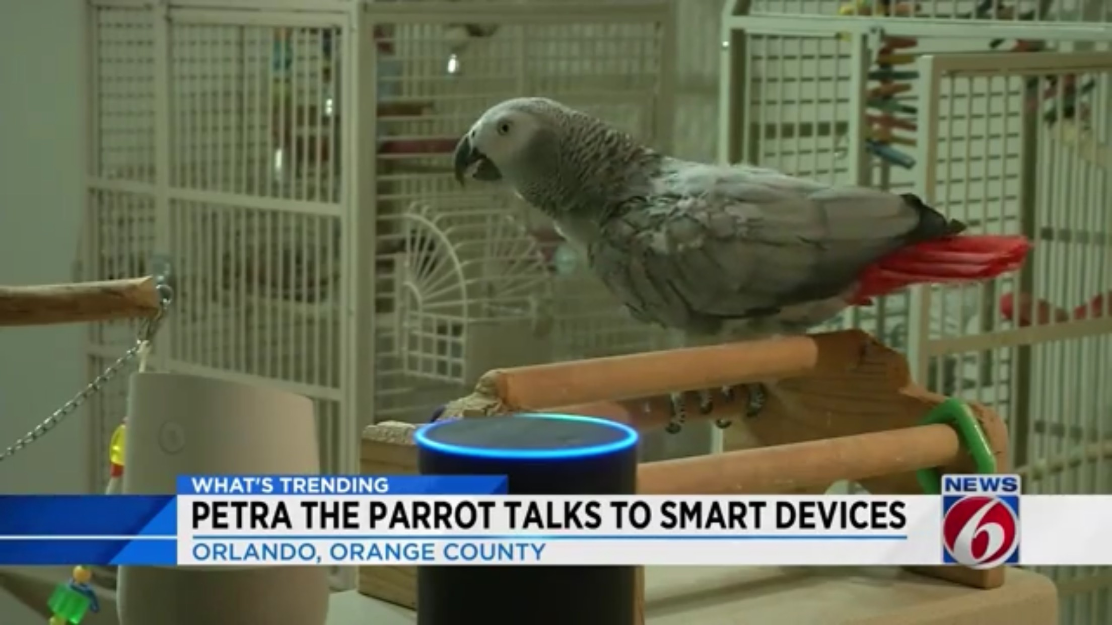 Petra The Parrot Talks To Smart Devices