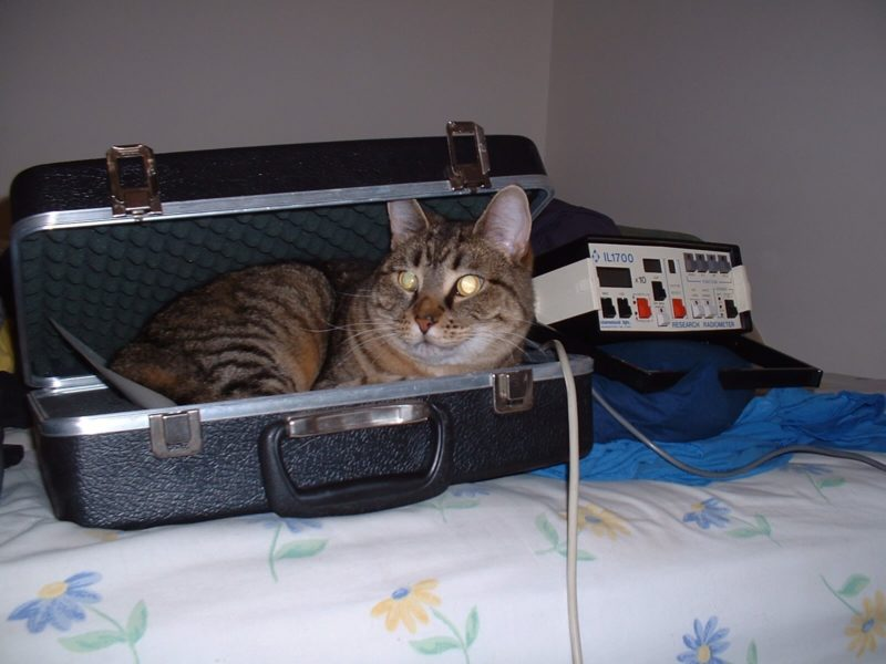 Rocky the cat in a case for a piece of scientific equipment