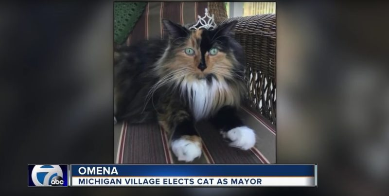Michigan Village Elects Cat As Mayor
