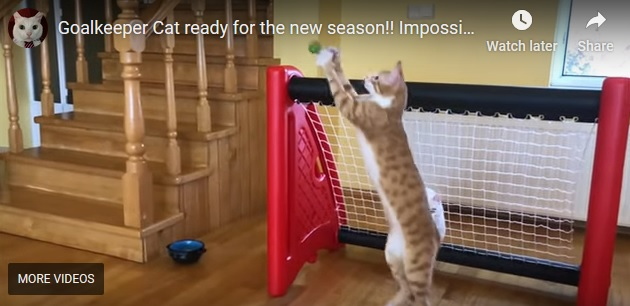 Screencap from Goalkeeper Cat video