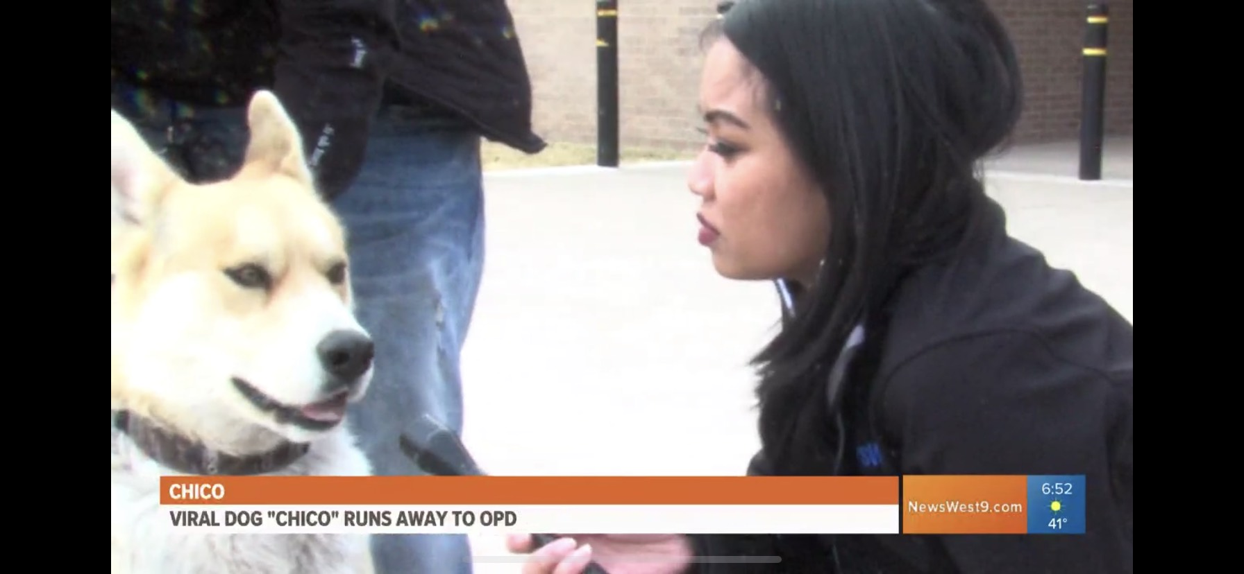 """Chico: Viral Dog """"Chico"""" Runs Away To OPD"""
