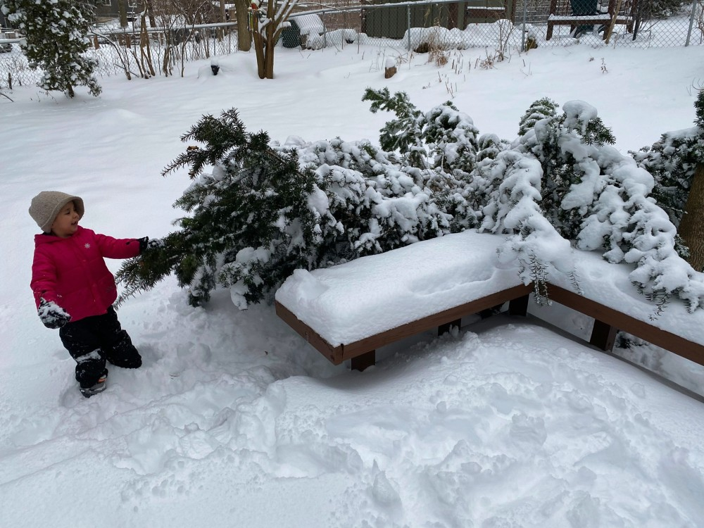Almost six year old starts to clear snow from the tree