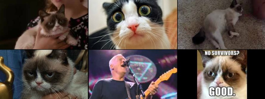 Five cats, four of which are Grumpy Cat, and one Dave Gilmour of Pink Floyd.