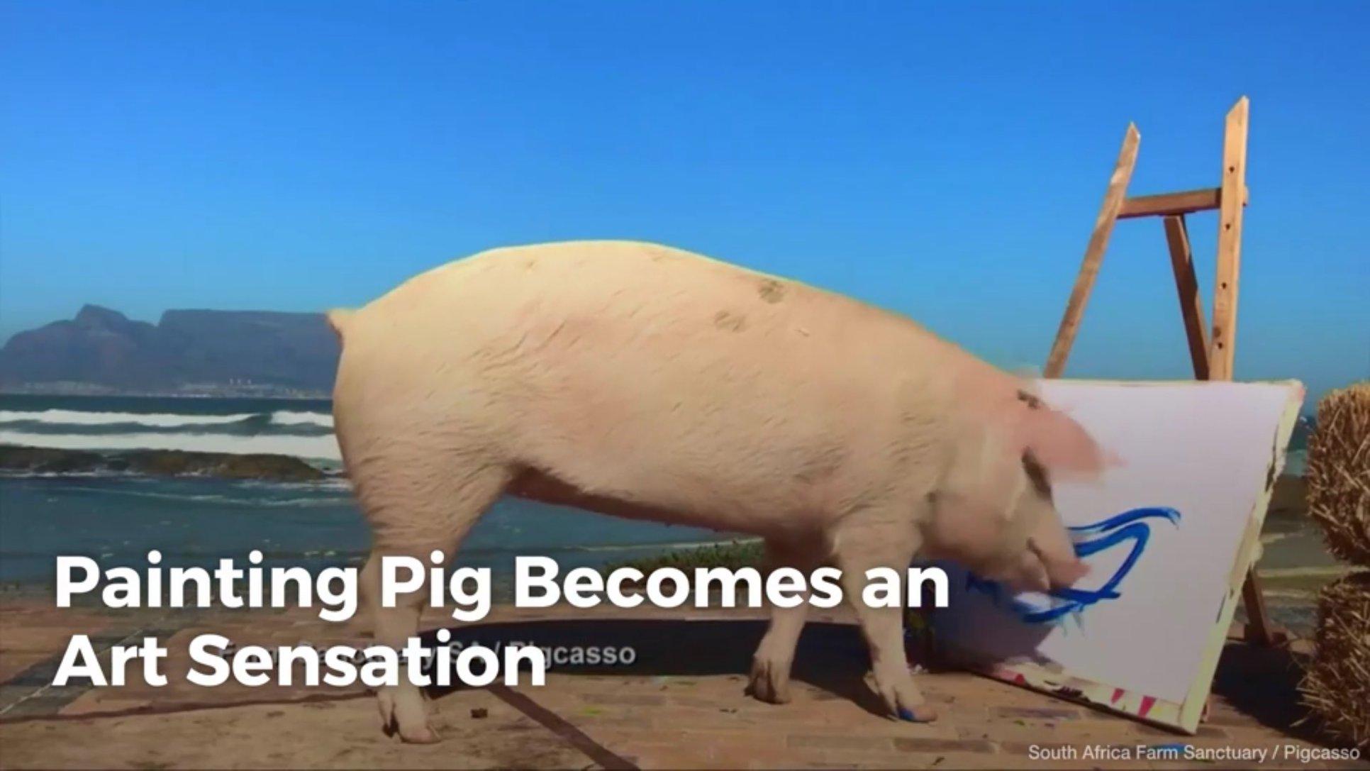 Painting Pig Becomes An Art Sensation