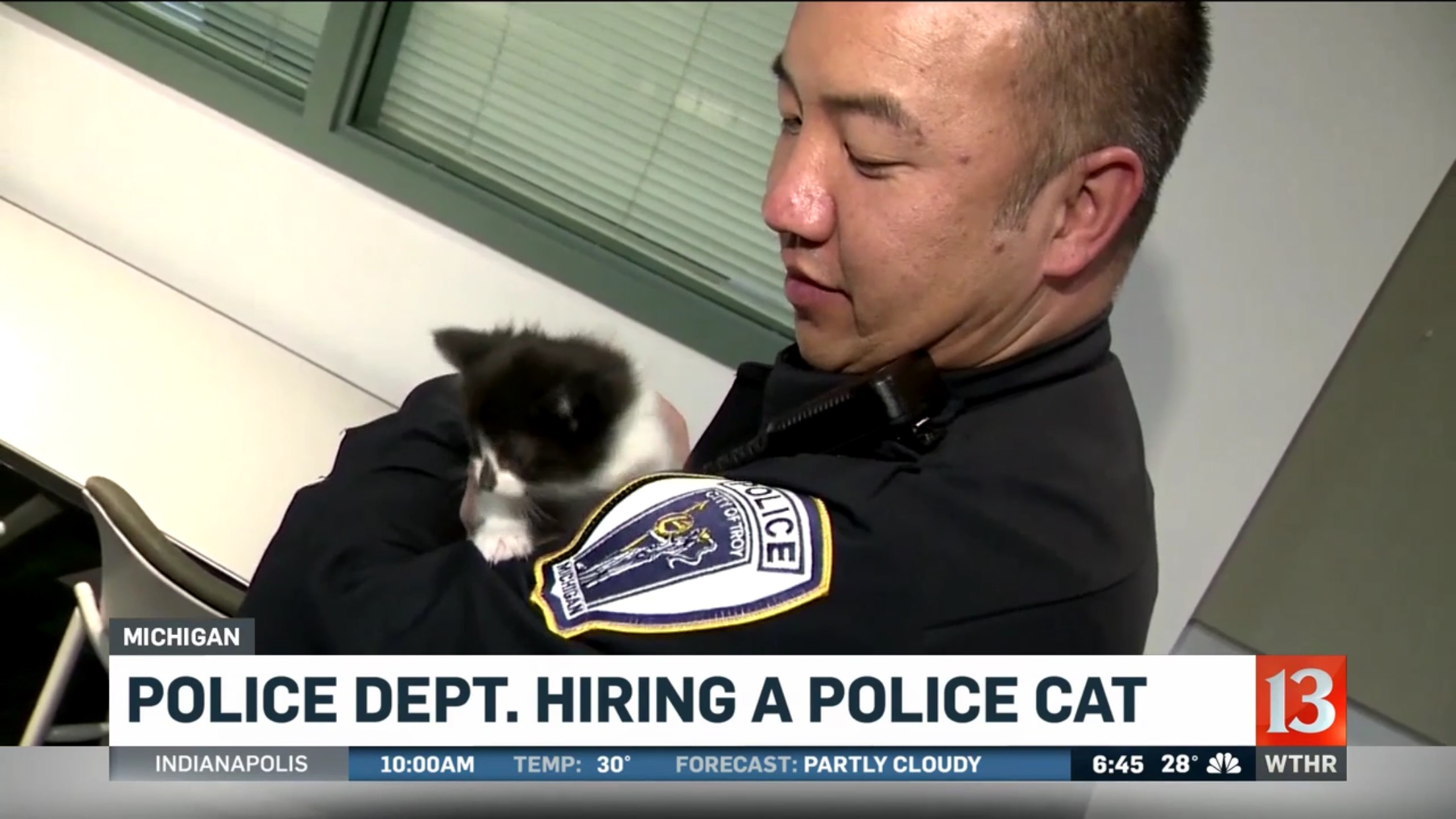 Police Dept. Hiring A Police Cat