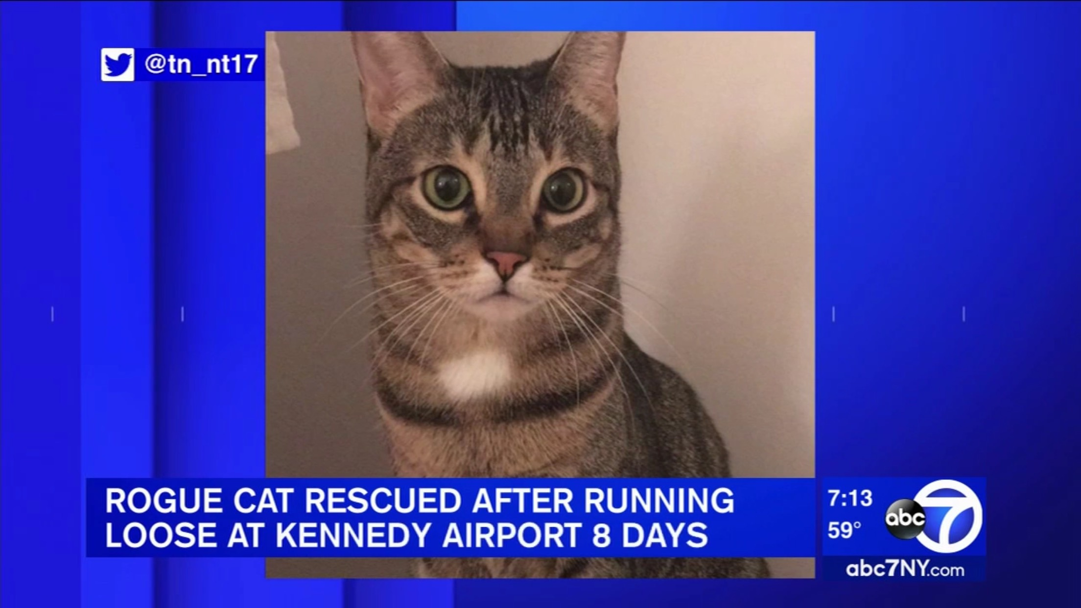 Rogue Cat Rescued After Running Loose At Kennedy Airport 8 Days