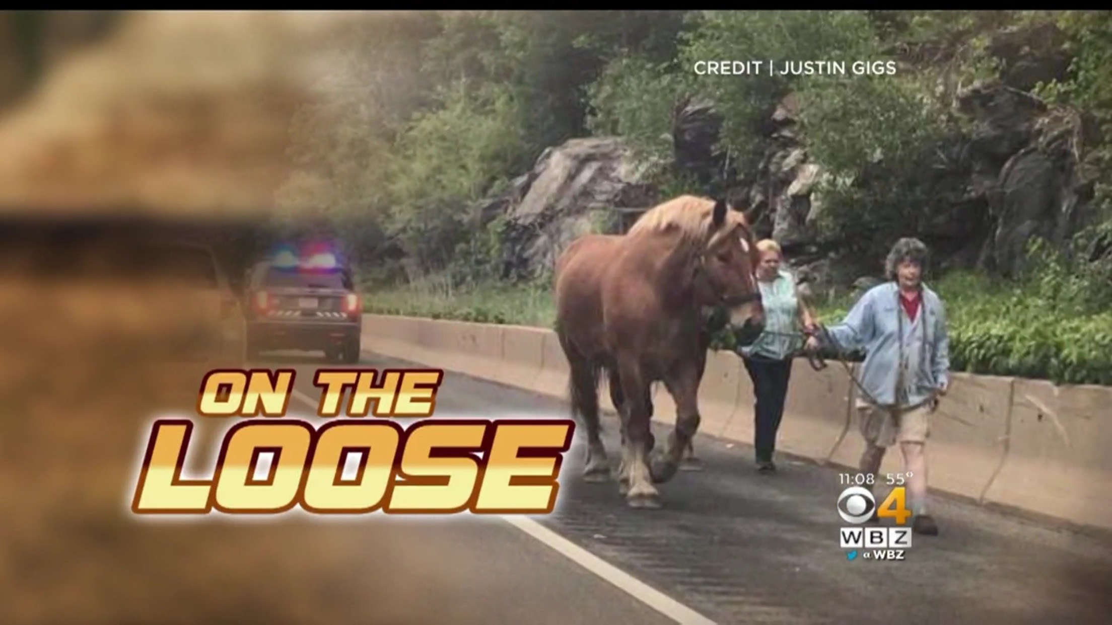 A Horse... On The Loose!