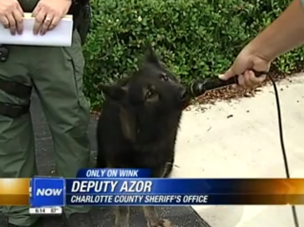 Deputy Azor: Charlotte County Sheriff's Office (Deputy Azor is a dog)