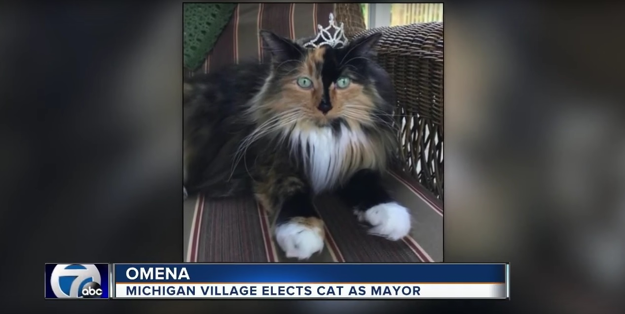 Michigan Village Elects Cat As Mayor