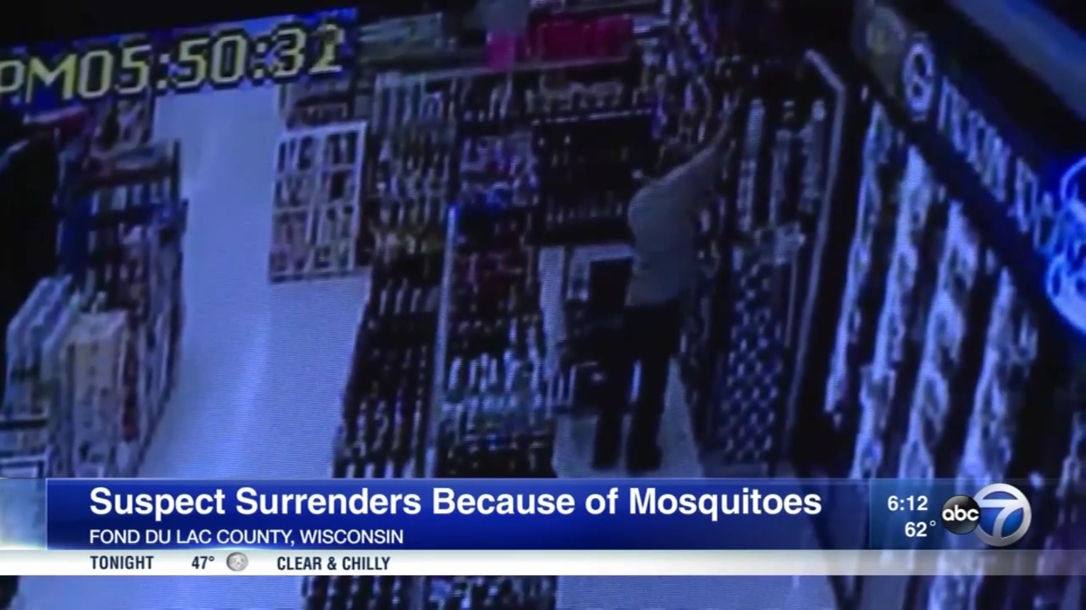 Suspect Surrenders Because Of Mosquitoes