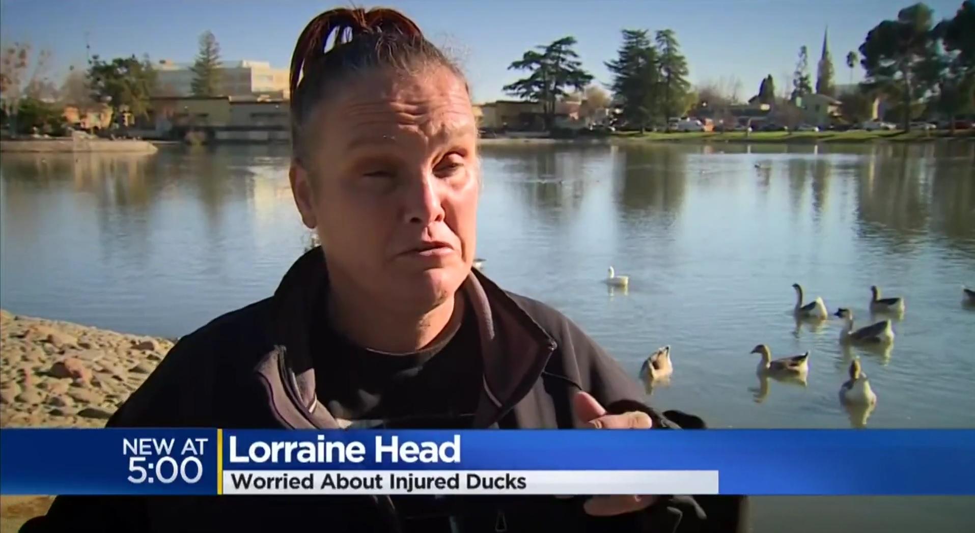 Lorraine Head: Worried About Injured Ducks
