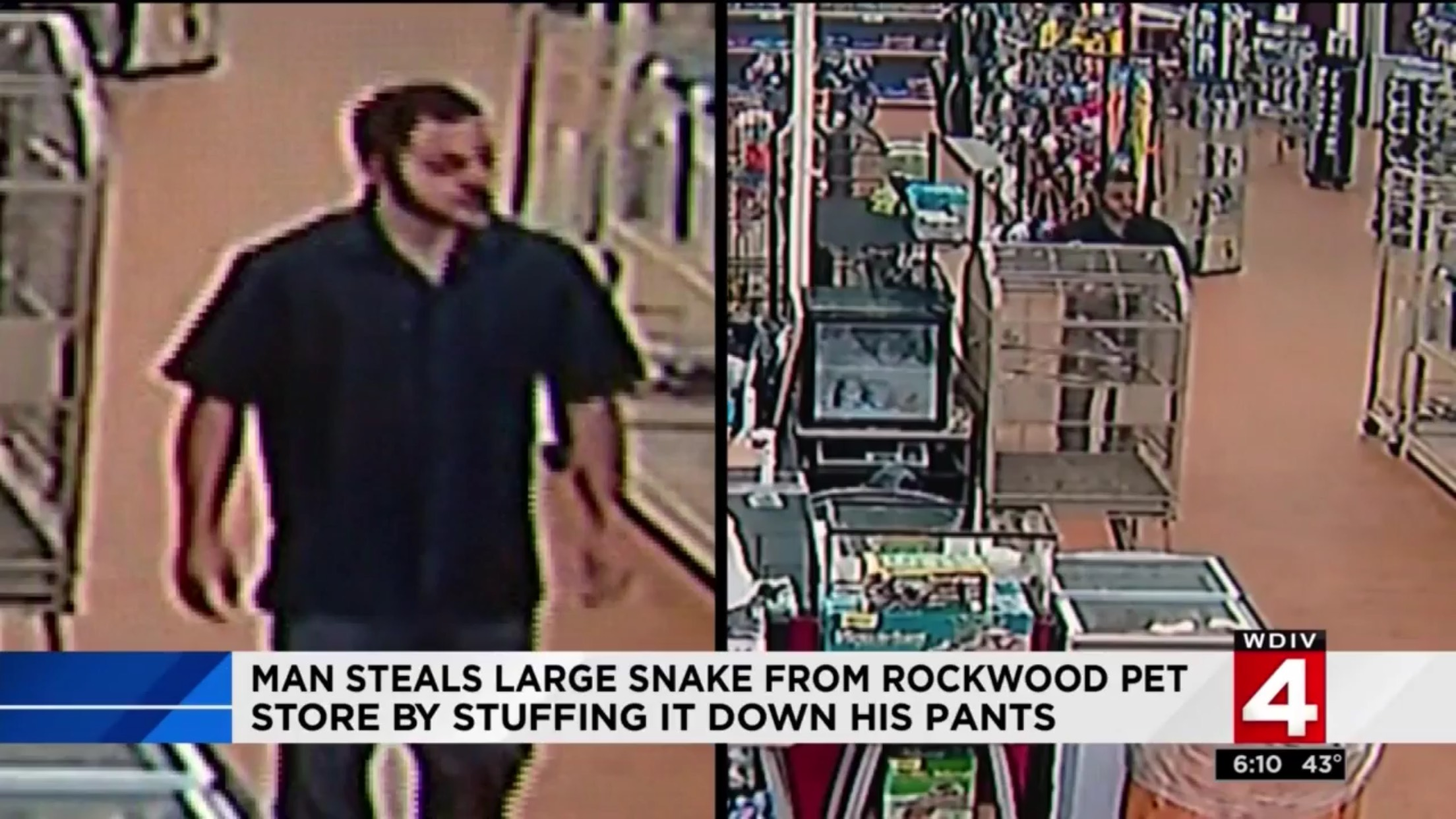 Man Steals Large Snake From Rockwood Pet Store By Stuffing It Down His Pants