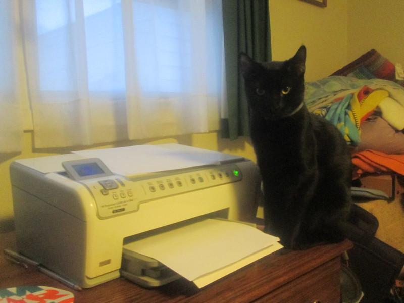 A black cat sitting next to a computer printer. (Photo by Random Retail via Flickr/Creative Commons https://flic.kr/p/kjFW74)