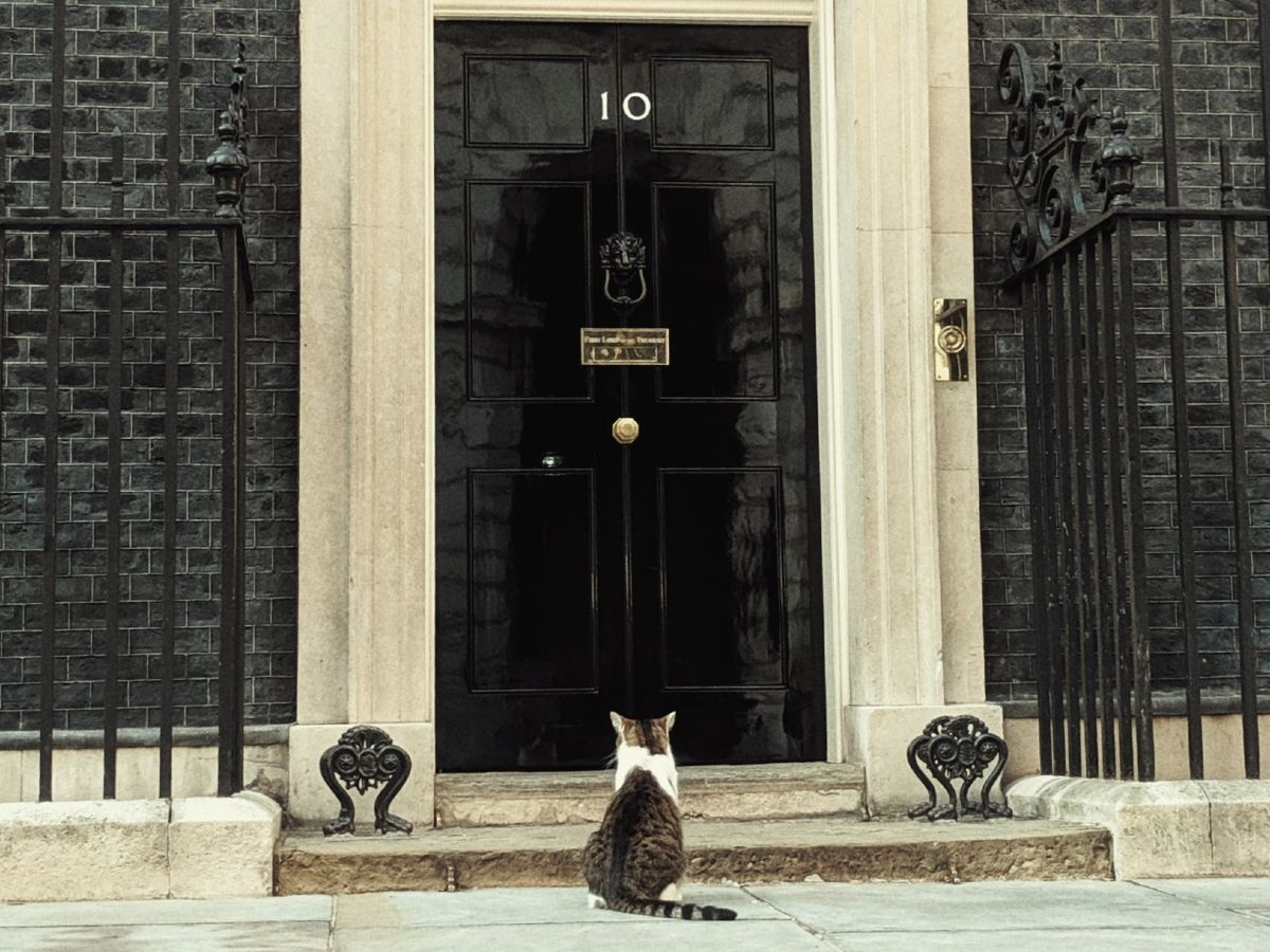 Larry the cat outside 10 Downing Street (Photo by Parrot of Doom via Wikicommons/Creative Commons https://en.wikipedia.org/wiki/Larry_(cat)#/media/File:Larry_the_cat_waiting_to_be_let_into_10_Downing_St.jpg)