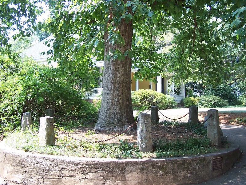 The Tree That Owns Itself, a tall tree in the center of a stone ring with a plaque at the base. (Photo by J. Stephen Conn via Flickr/Creative Commons https://flic.kr/p/7c4nbz)