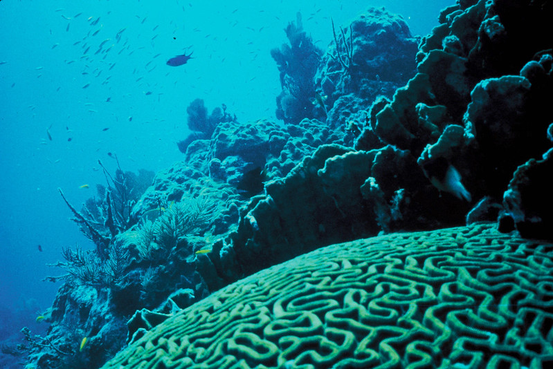 A coral reef, with a brain coral in the foreground. (Photo by Jerry Reed/US Fish & Wildlife Service, via Flickr/Creative Commons https://flic.kr/p/dQqpqM)