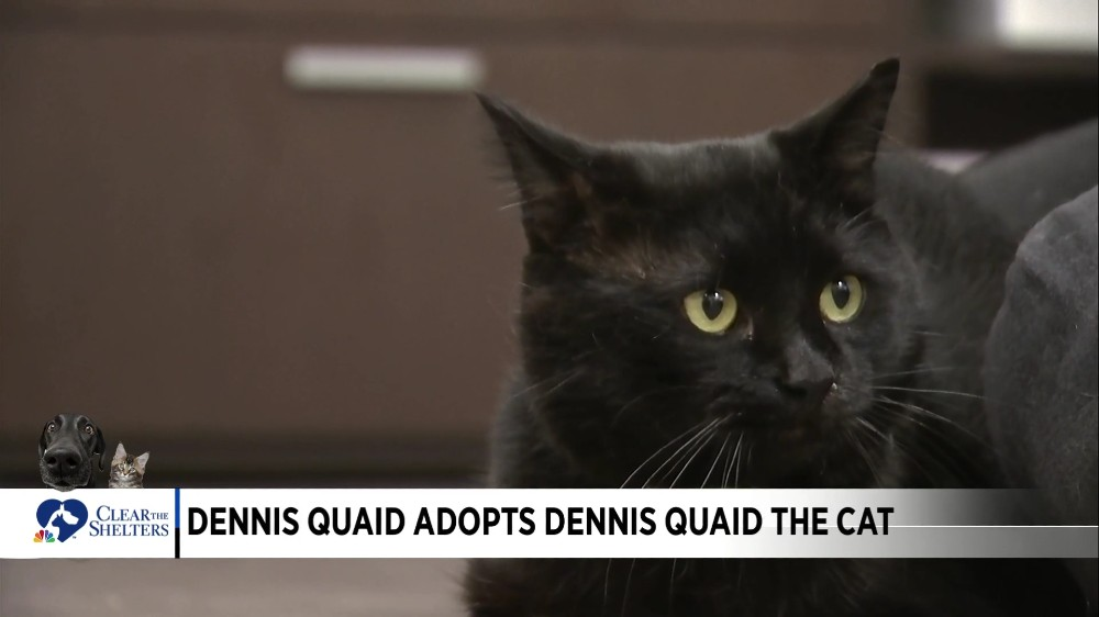 Dennis Quaid Adopts Dennis Quaid The Cat