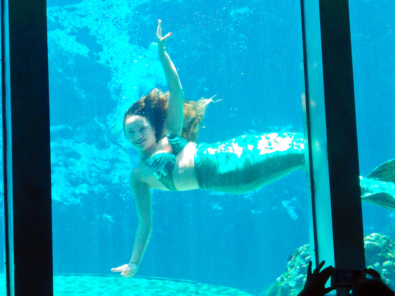 A Weeki Wachee Mermaid swims. (Photo by Steven Martin via Flickr/Creative Commons https://flic.kr/p/JLcbeP)