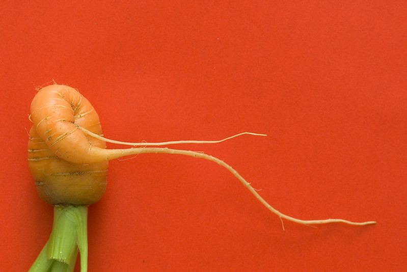 A carrot that looks like it's got two really long, skinny arms (photo by Brett Forsyth via Flickr/Creative Commons https://flic.kr/p/inZYC)