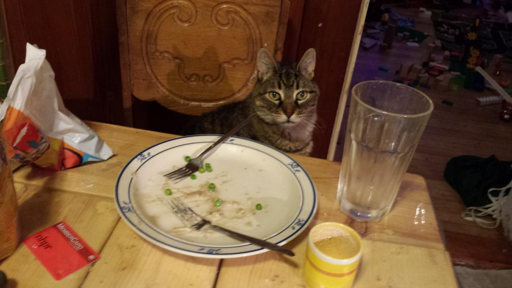 Rocky the grey tabby cat looks miffed standing on a chair next to the dinner table, and looking at a plate without any food on it