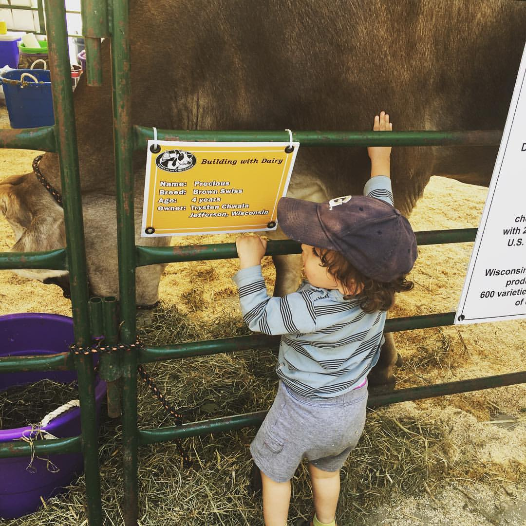 Two year old pets a cow