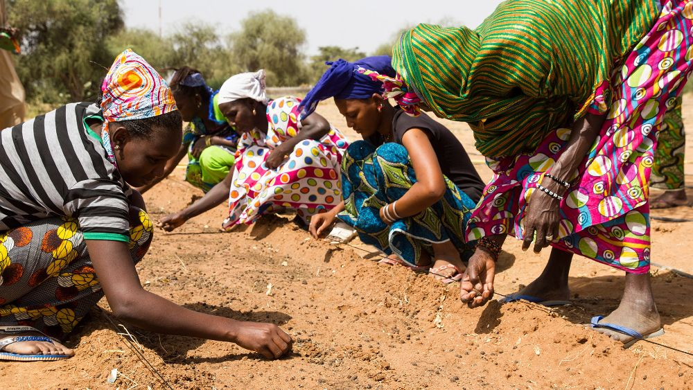 Women in colorful clothes plant seeds in light brown dirt. (Photo via GreatGreenWall.org)