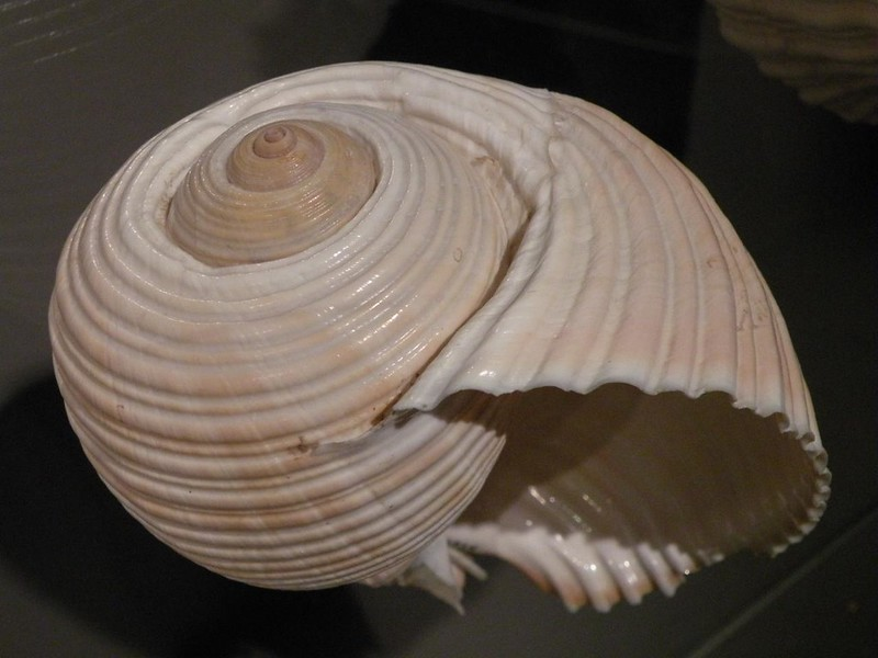 Mollusk shell. (Photo by Stephanie via Flickr/Creative Commons https://flic.kr/p/62TKab)