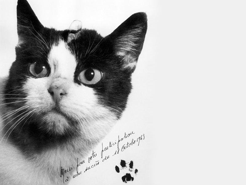 Publicity photo of Félicette. (Photo: public domain via Smithsonian https://www.smithsonianmag.com/smart-news/felicette-first-cat-space-finally-gets-memorial-180974062/)